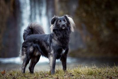 Verena Dechant Hundeshooting Fotografie Fotografin Niederbayern Bayern