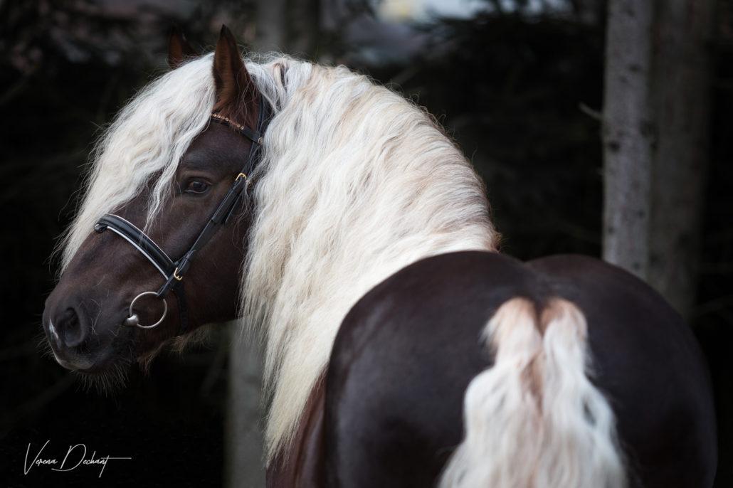 Verena Dechant Pferdefotografie Niederbayern Bayern
