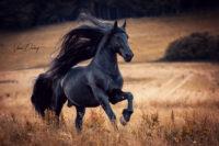 Pferdefotografie, Shooting, Verena Dechant, Landshut, Bayern, Niederbayern, Pferdeshooting, Pferd und Mensch, Fotoshooting, Fotografin, Fotograf Landshut, Pferdefotos, Pferdebilder, München