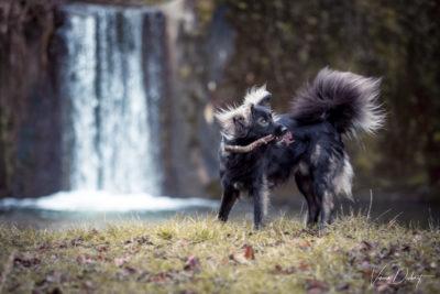 Verena Dechant Hundefotografie Bayern