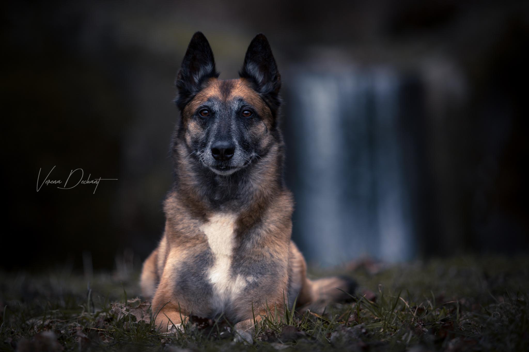 Verena Dechant Hundefotografie Niederbayern Bayern