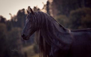 Verena Dechant Pferde Bayern