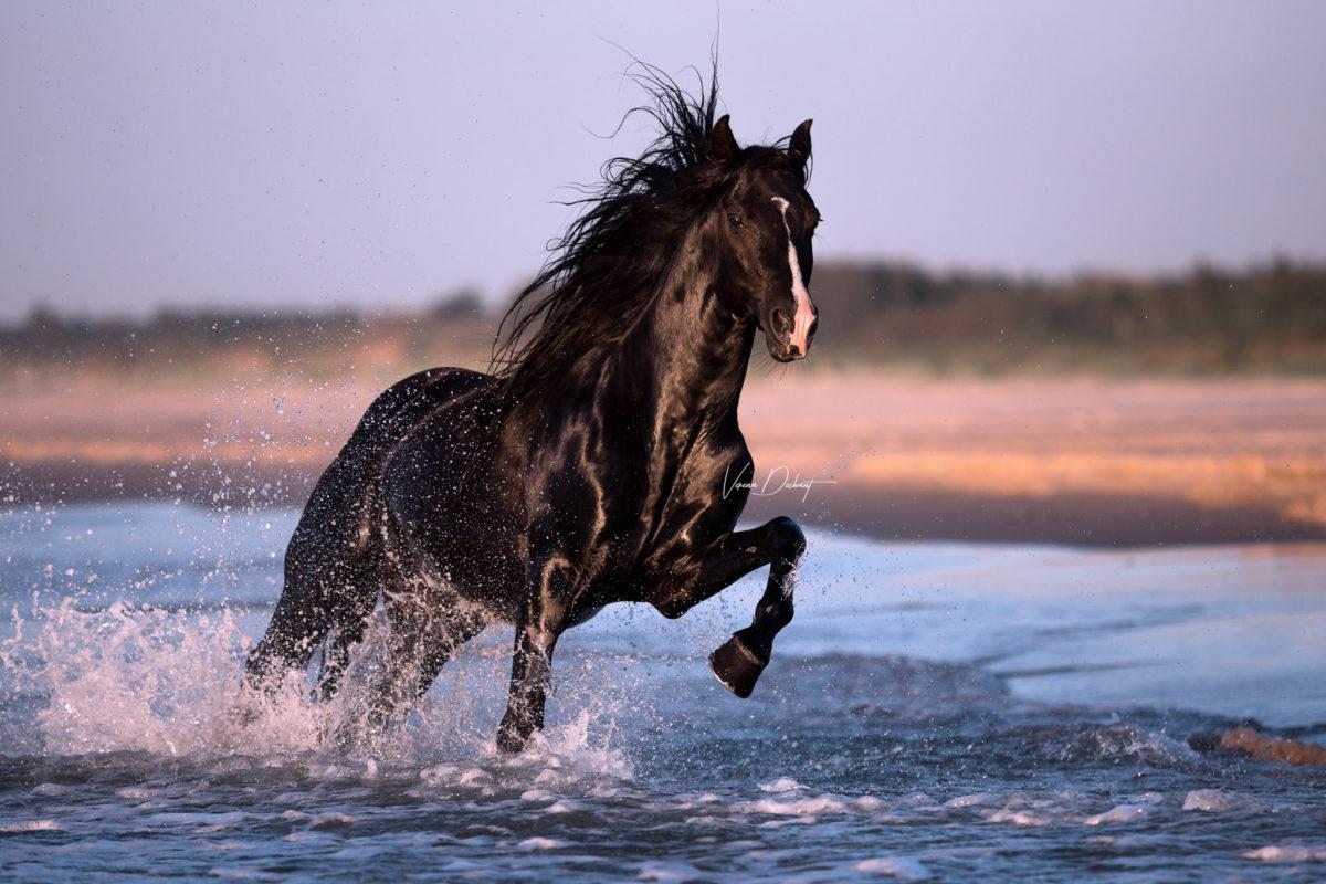 Verena Dechant Pferdefotografie Bayern Niederbayern