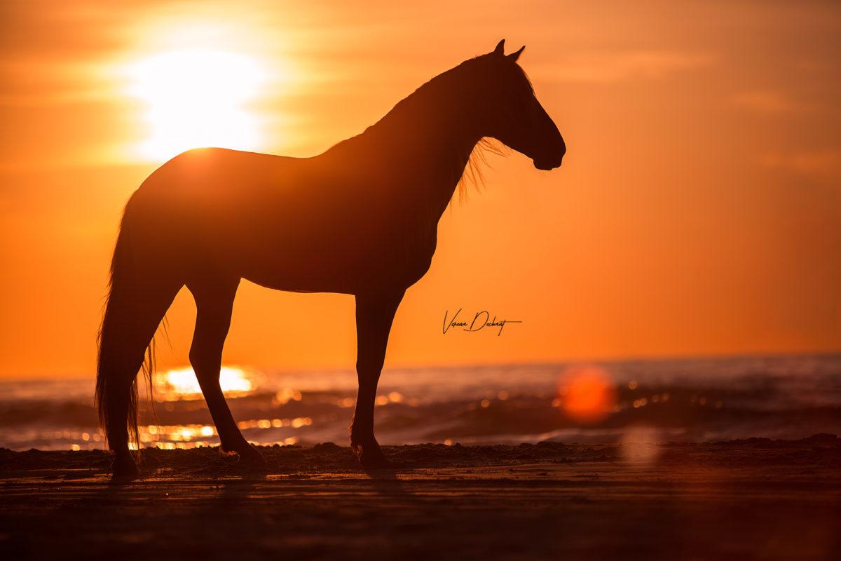 Pferd, Portrait, Verena Dechant, Fotografin, Niederbayern, Bayern