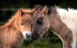 Verena Dechant Pferde Bayern Pferdefotografin Niederbayern