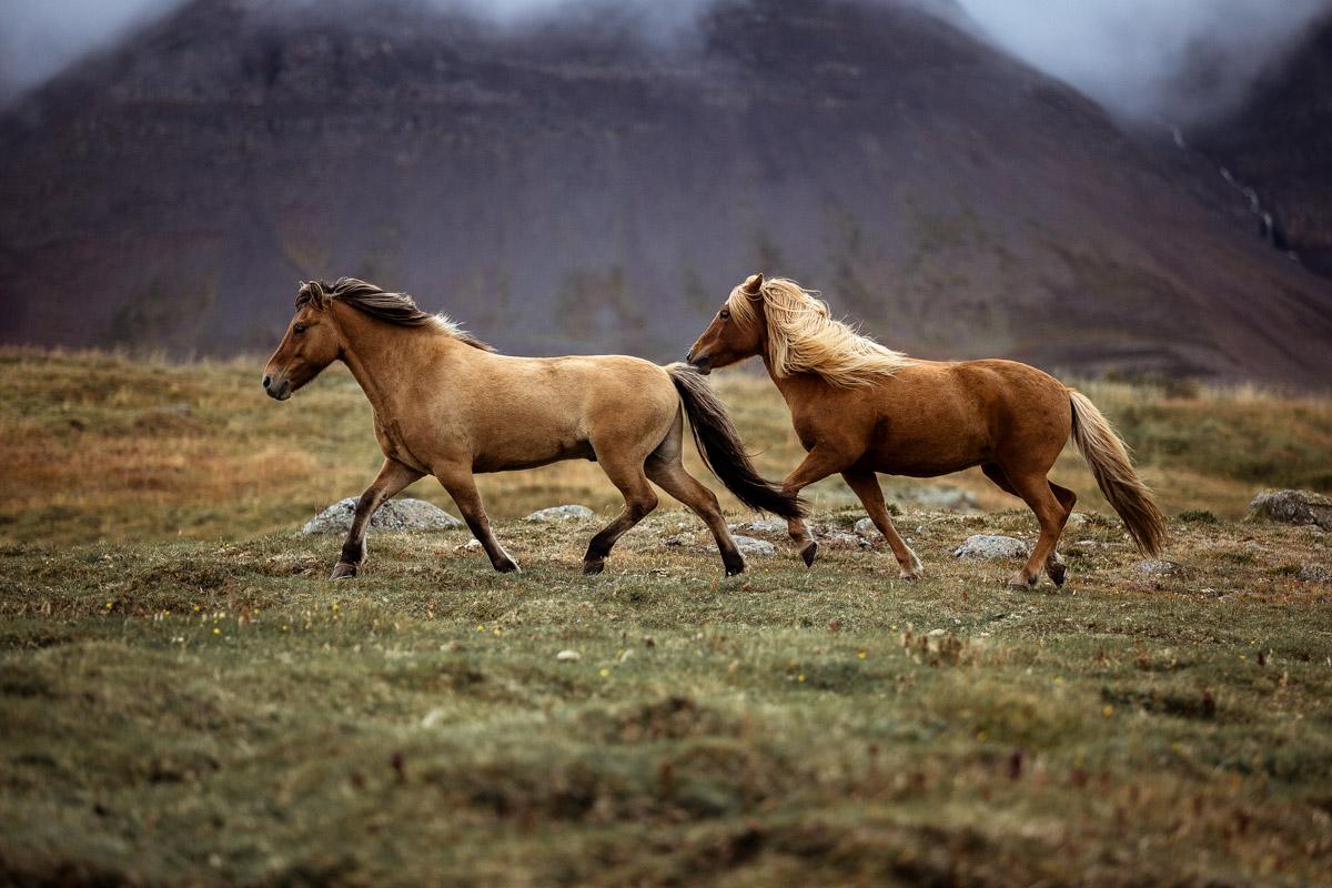 Tyr & Snaelda auf Island