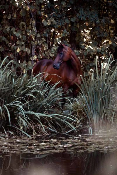 Pferd am Wasser