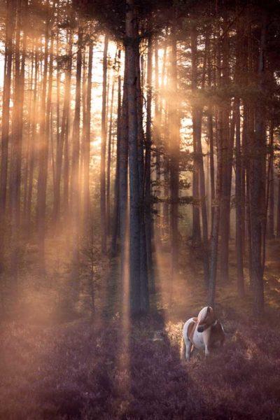 Pony beim Portfoliotag von Ann-Christin Vogler