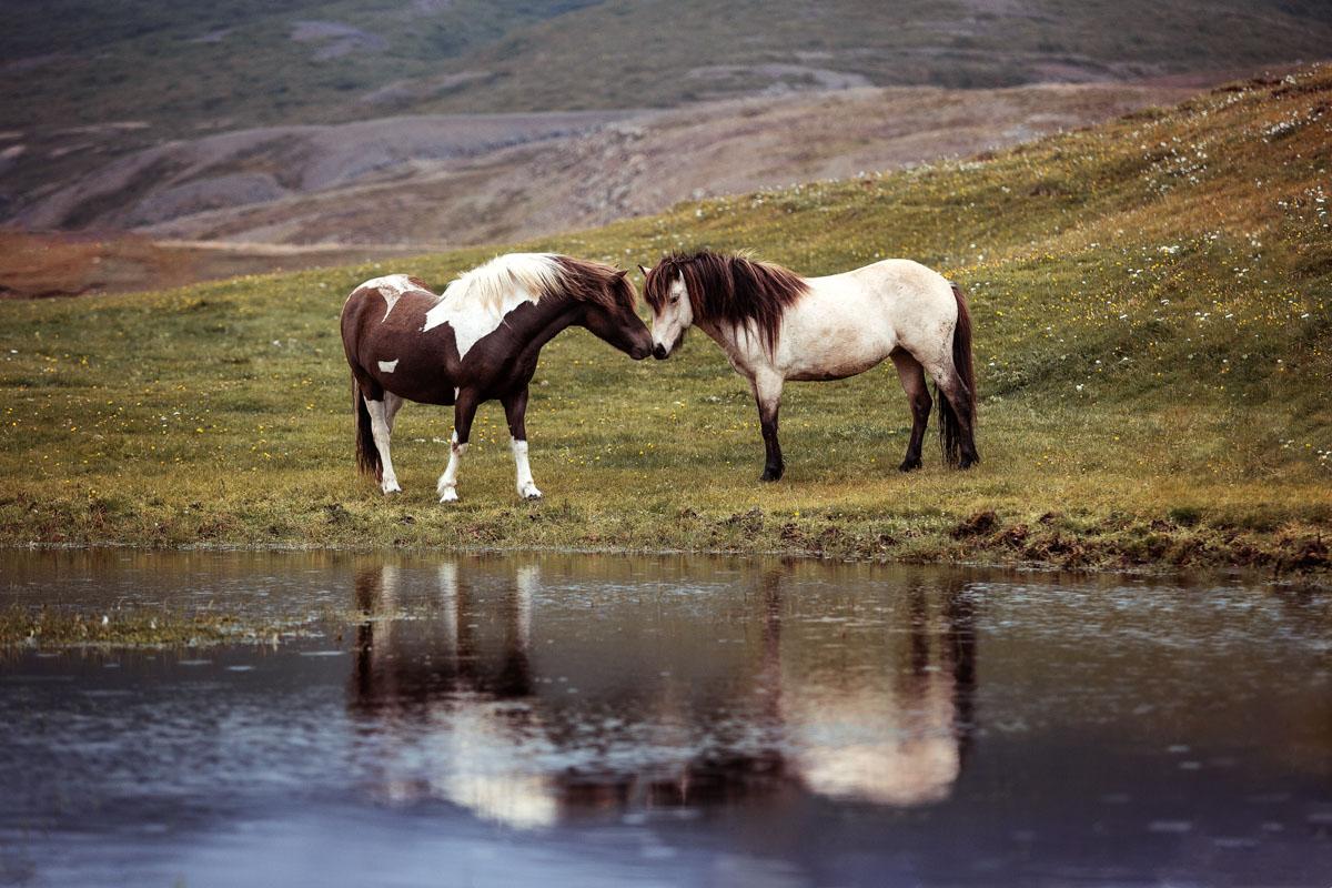 Brynja & Sigt auf Island