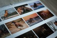 Kalender 2019 Verena Dechant Pferde