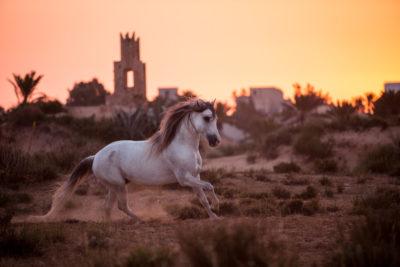 Berberhengst Allegro - Entstanden auf der Fotoreise nach Djerba - organisiert von Claudia Rahlmeier