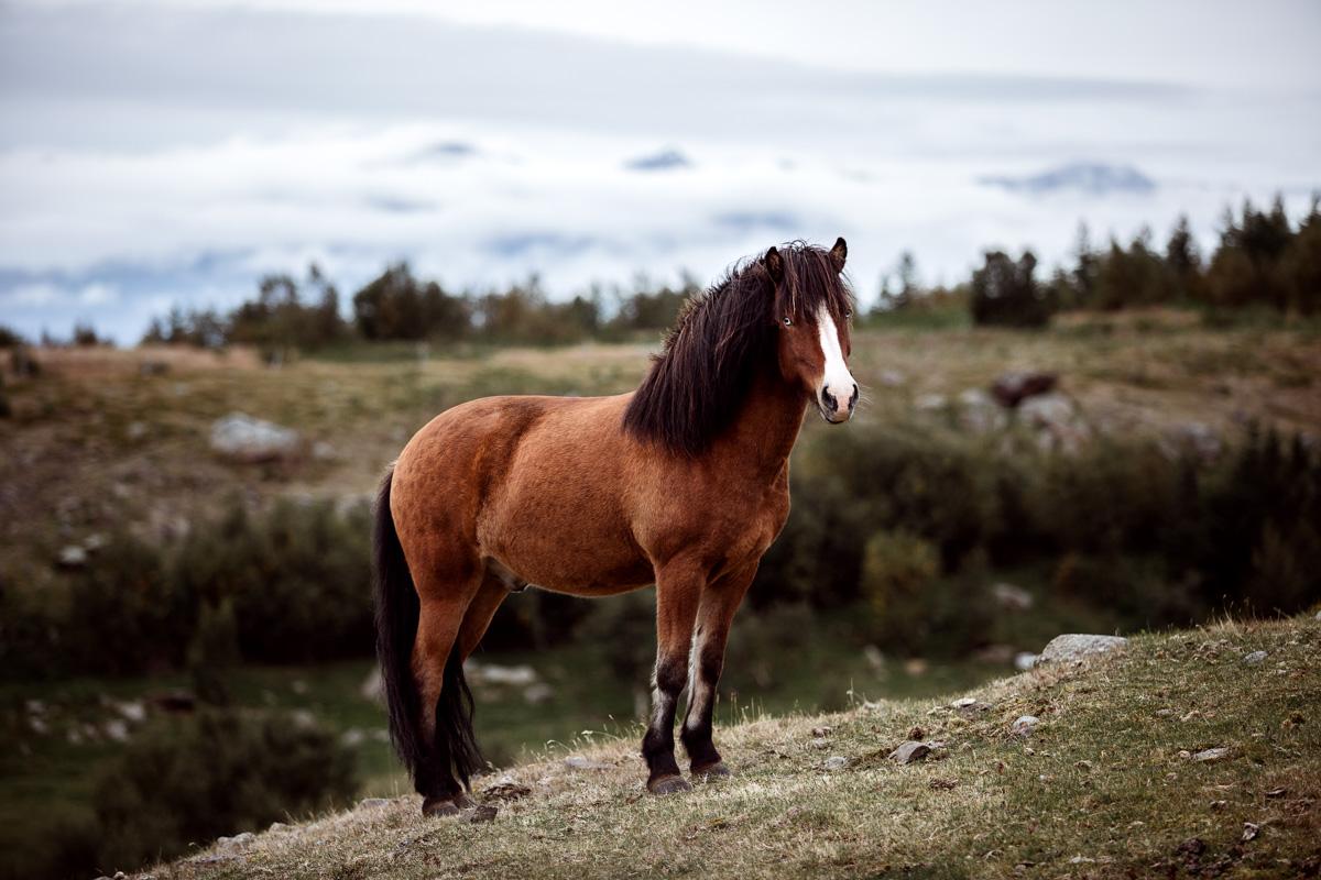 Isländer auf Island