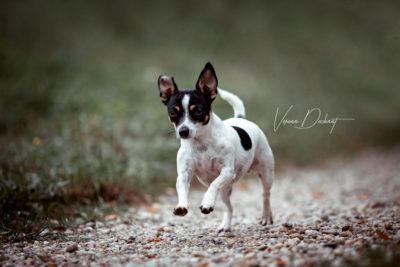 Verena Dechant, Fotografin, Hundefotografin, Niederbayern, Landshut, Bayern, Portrait, HundundMensch