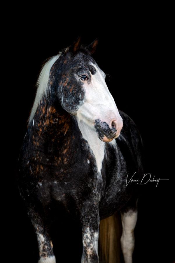 Verena Dechant, Pferdefotograf, Landshut, Bayern, Pferd und Mensch, Portrait,