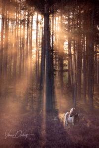 Verena Dechant, Pferdefotograf, Landshut, Bayern, Pferd und Mensch, Portrait, Morgensonne, Nebel, Wald