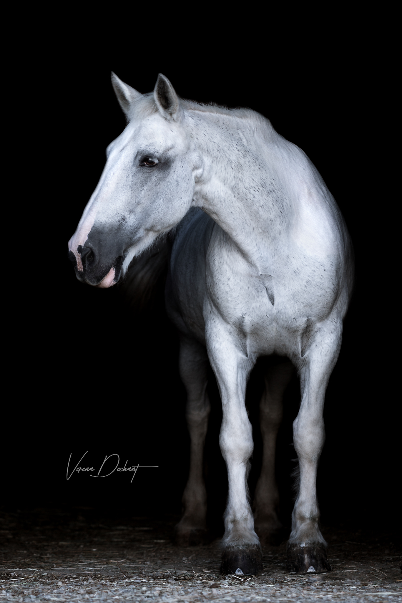 Pferdefotografie, Shooting, Verena Dechant, Landshut, Bayern, Niederbayern, Pferdeshooting, Pferd und Mensch