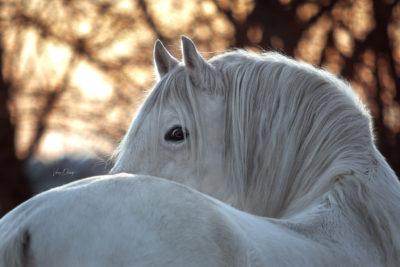 Pferdefotografie, Shooting, Verena Dechant, Landshut, Bayern, Niederbayern, Pferdeshooting, Pferd und Mensch, Fotoshooting, Fotografin, Fotograf Landshut