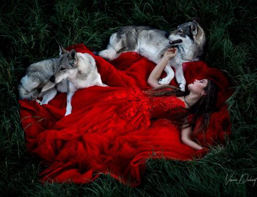 Fotografentreffen – Von Wölfen und Pferden