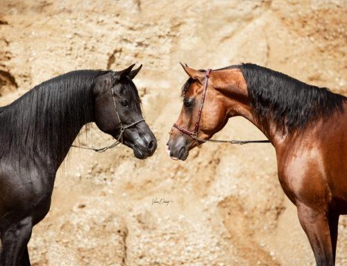 5. Fotografentreffen – Araber in der Sandgrube