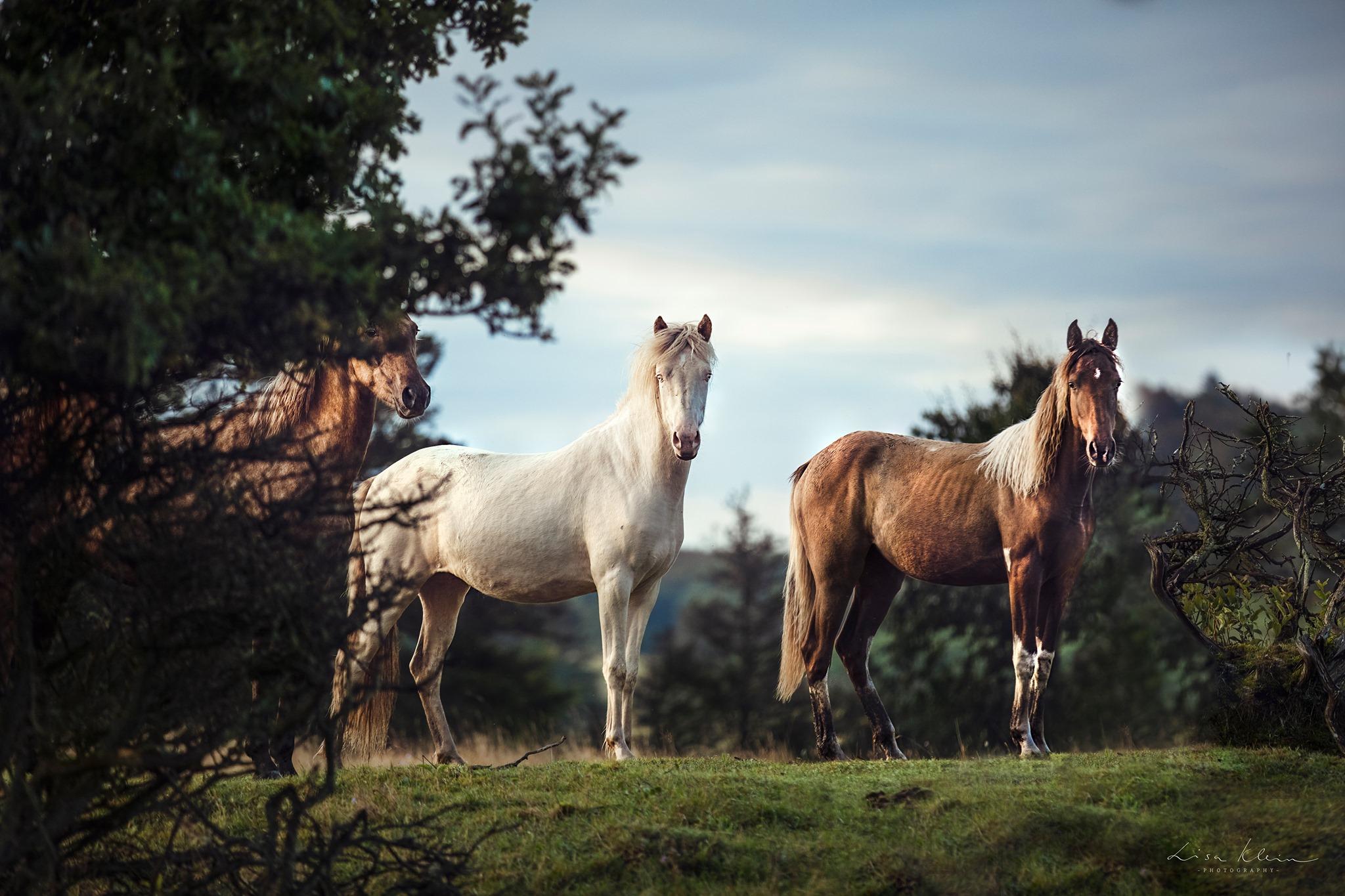Fotoreise Dänemark - Foto: LIsa Klein